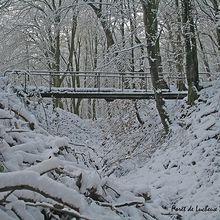 Balade hivernale en forêt de Lucheux