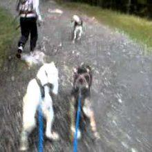 Les 3 nouveaux chiens pour 2011
