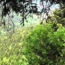 Petit tour sur les Hauts de Mitzach