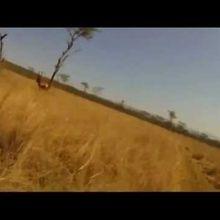 Rugby / Video : Non, un Springbok n'est pas une gentille Gazelle...
