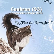 Chat norvegien - expo nationale LOOF -