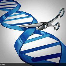 Glané sur la toile (37) : un Blog du C@fé des sciences sur l'édition du génome humain