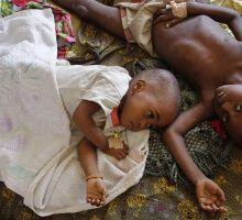 Glané sur la toile (42) : le coup de gueule de Jacques Henry sur les moustiques modifiés pour lutte contre le paludisme
