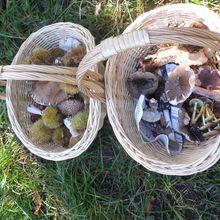 Quelques photos de notre sortie champignons du samedi 15 octobre