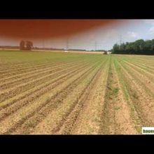 Désherbage de carottes bio