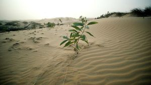 Africa: Desert Plantations Could Help Capture Carbon