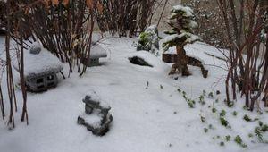 La neige s'invite au jardin
