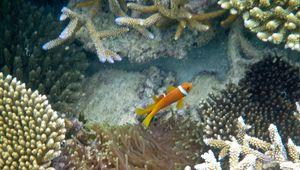 Voyage de Noces – Maldives – Le monde de Némo