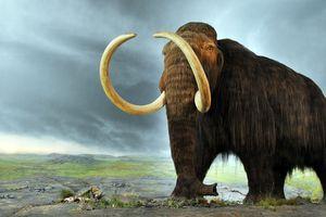 Des chercheurs d'Harvard souhaitent ressusciter le mammouth laineux, disparu il y a 4 000 ans
