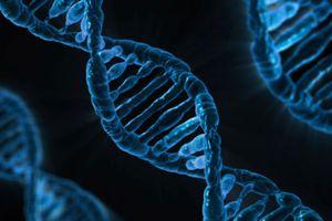 Votre intelligence dépend de vos gènes selon cette étude