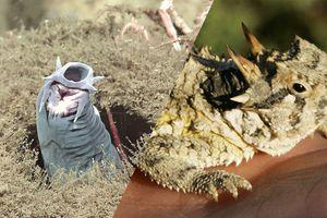5 animaux aux systèmes de défense surprenants