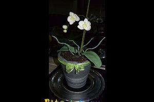 Réaliser un gâteau en forme de pot d'orchidées