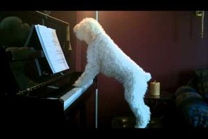 Tucker piano Dec 7'2010.wmv...