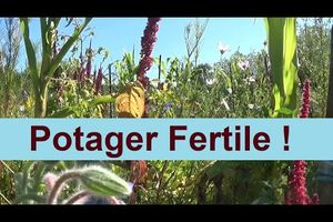 Le Potager Fertile !