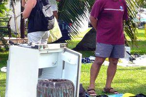 Puces nautiques de Tahiti