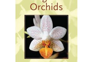 Fragrant Orchids