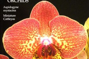 Orchids - American Orchid Society