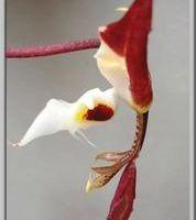 Vous ne verrez plus les orchidophiles comme avant...