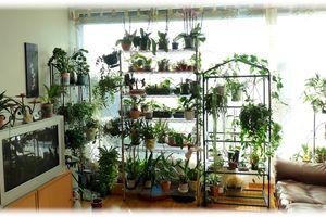 Mon jardin d'orchidées et de Hoyas sous le soleil de décembre...
