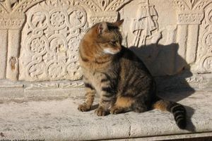 huns chats de Torcello