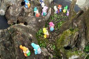Réunion de Toumilus sur une souche d'arbre