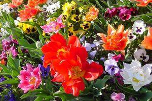 lien magique pour faire pousser de jolies fleurs virtuelles