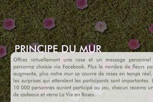 Plantez votre bouton de rose sur le premier mur de roses virtuel