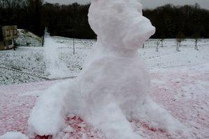 chien de neige