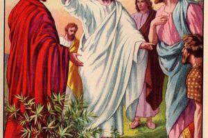 Mc 6, 7-13 Je n'étais pas prophète ni fils de prophète ; j'étais bouvier, et je soignais les figuiers.