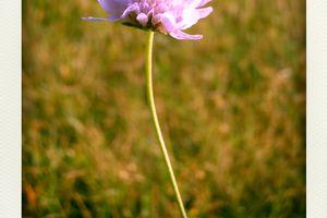 Fleurs d'Automne ...