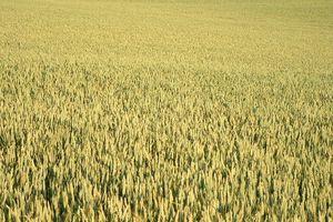 Le Grain, Le Vin et La Nouvelle Fondation