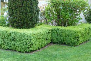 """Rubrique"""" notre Jardin cette semaine ( sem.14)"""