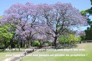 Prière universelle du dimanche 30 septembre 2012