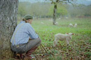 L'amour du berger