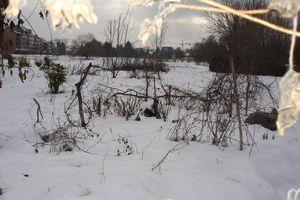 seul sous la neige ...