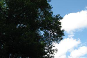 Vue sur les arbres