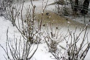 oiseaux dans la neige