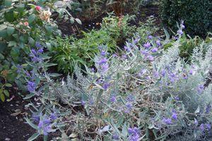 Quelques plantes de septembre