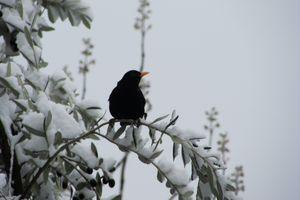 Le Clos Fleuri sous la neige ....
