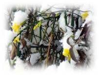 Le printemps tient ses promesses