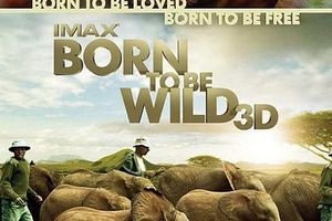 ACTUELLEMENT : Born to Be Wild 3D (BANDE ANNONCE VO 2011) 12 10 2011
