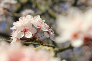 Floral poetry (en)