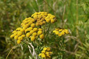 A la decouverte des plantes sauvages de l'été !