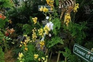 19th World Orchid Conference - Le genre Disa