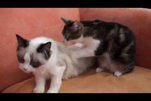 Massage de deux petites chattes ! - vidéo fun