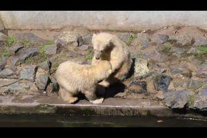 Zoo Brno 17.06.2013 Videos
