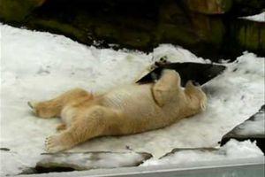 Knut Video 22.02.2009
