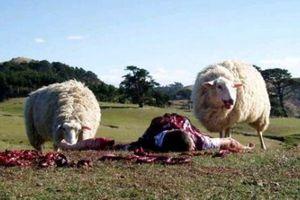 Les moutons enragés - Les moutons en ont marre, ils s'informent!