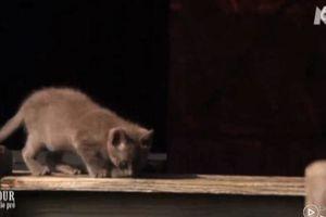L'Amour est dans le pré 10 : la chute d'un chaton fait le buzz