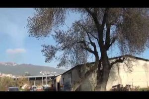 Foire de l'olive à Akbou